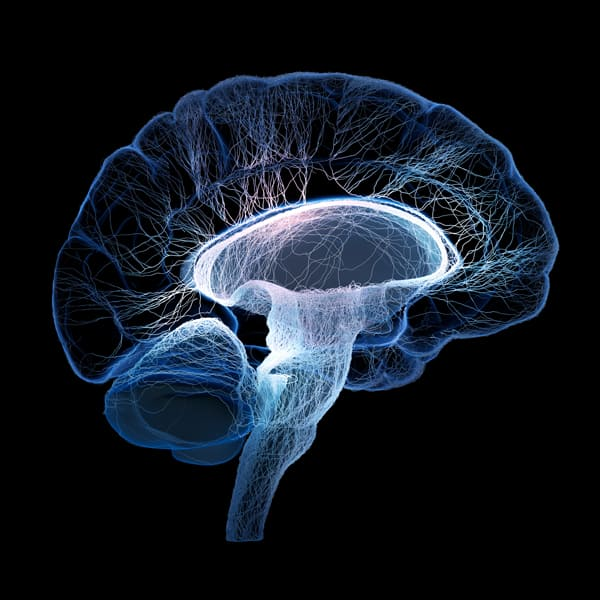 brain illustration with nerves | TBI Victims May be at an Increased Risk for Suicide